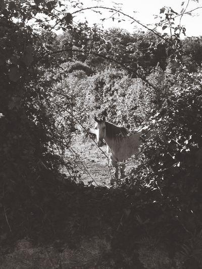 Morning run encounters Walking Around Blackandwhite