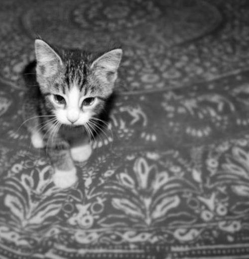 Kitten 🐱 Meow Tiny Adorable Cat  Cute Sleeping Kitten Sleepy Kitty Sweet Kitten