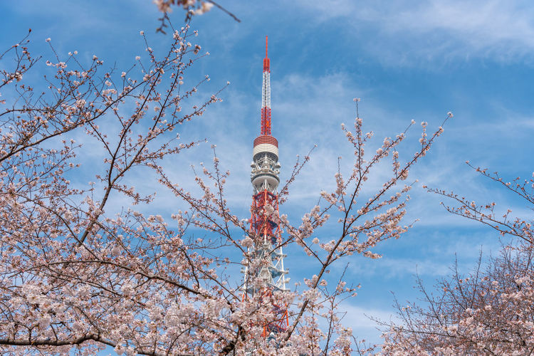 Low angle view of tokyo tower against blue sky during sunny day
