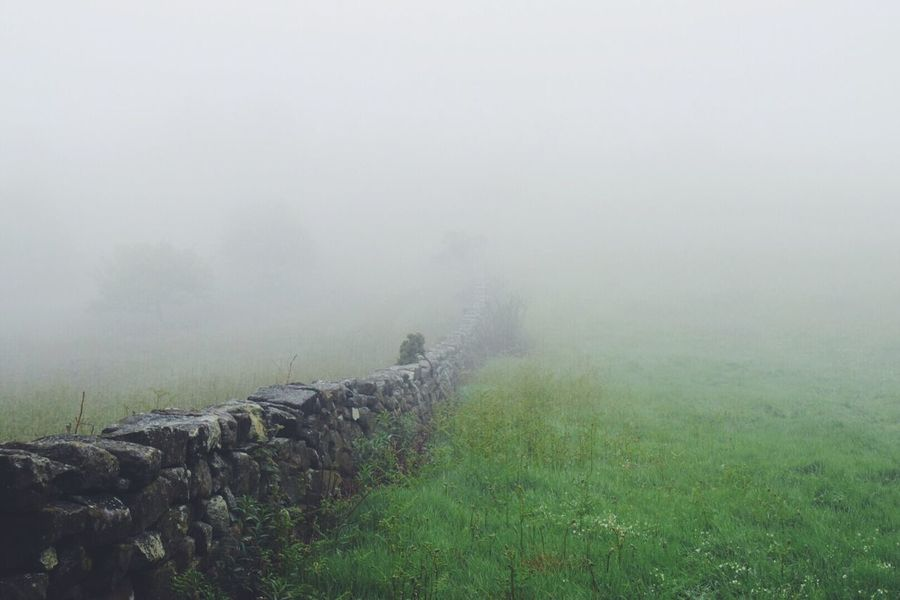 Fog wall   Fog Foggy Wall Green Grass Hugging A Tree Escaping Walking Around Relaxing Getting In Touch Shootermag Outdoors Eye4photography  EyeEm Gallery Taking Photos The Great Outdoors - 2016 EyeEm Awards Nature Countryside Hiking Adventure Exploring