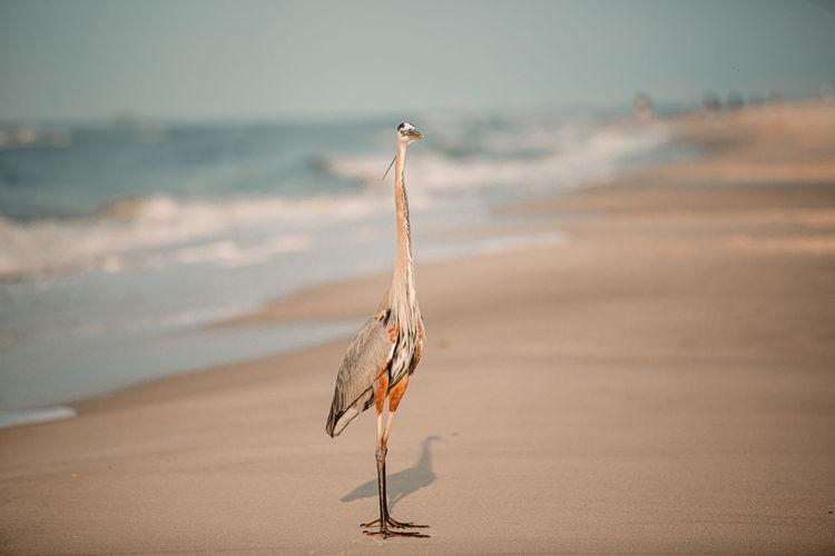 Crane on beach against sky