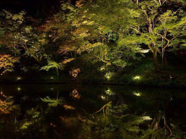 夏の夜間特別拝観、高台寺・燈明会。 Nightphotography Night Lights Reflection Good Night