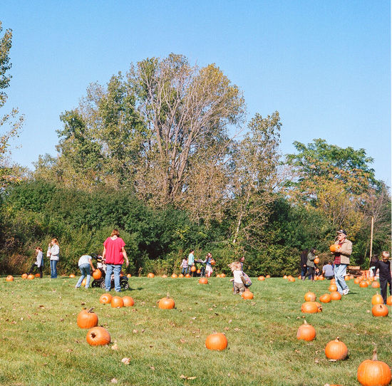 The Pumpkin Patch Autumn Child Day Fall Colors Festival Field Great Pumpkin Party Outdoors Park People Pumpkins Togetherness Tree