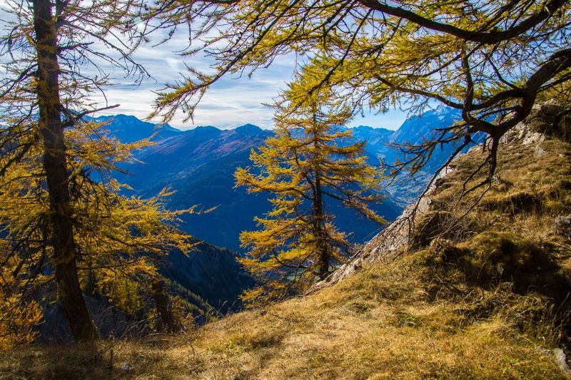 col of lien,valais,swiss Tree Plant Beauty In Nature Land Tranquility Scenics - Nature Nature No People Forest Tranquil Scene Environment Autumn Mountain Landscape Day Non-urban Scene Sky Change Growth Sunlight Outdoors Pine Tree Coniferous Tree Pine Woodland
