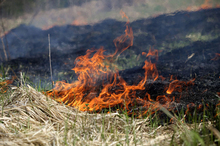 Close-up of bonfire in forest