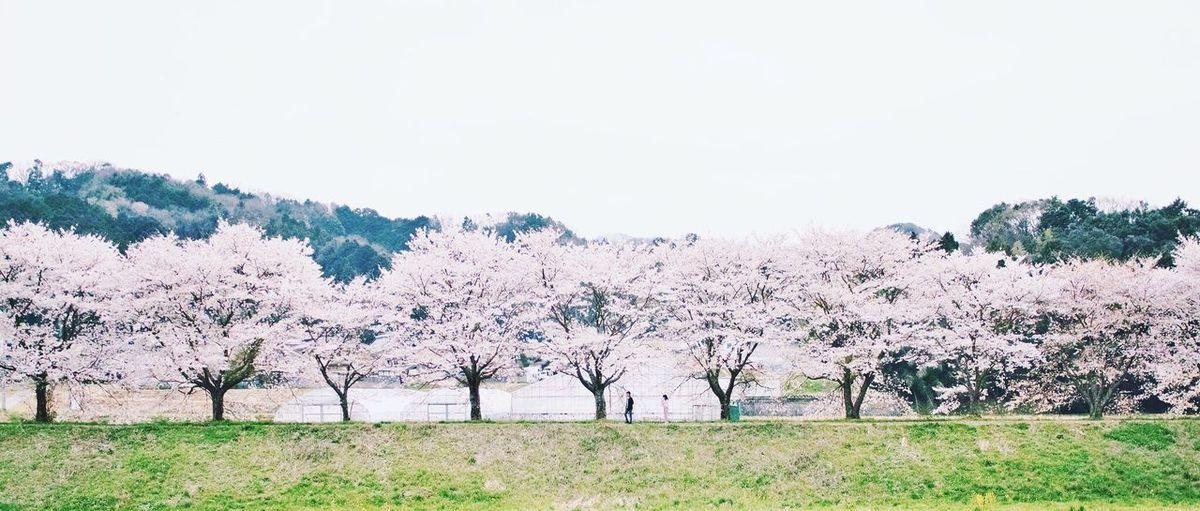 Scenic view of flower trees against sky