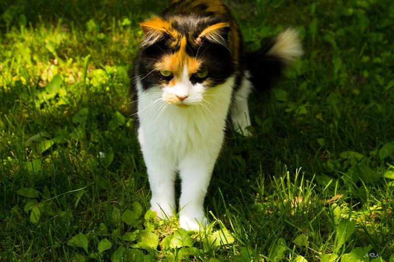 Animal Themes Day Domestic Animals Domestic Cat Feline Field Grass Nature One Animal Outdoors Pets