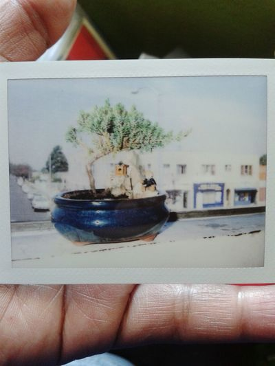 Bonsai Tree... Instax Filmgirl