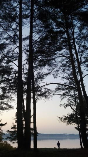 Silhouette trees by forest against sky during sunset