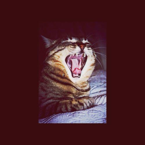 Cat Cats Beautiful