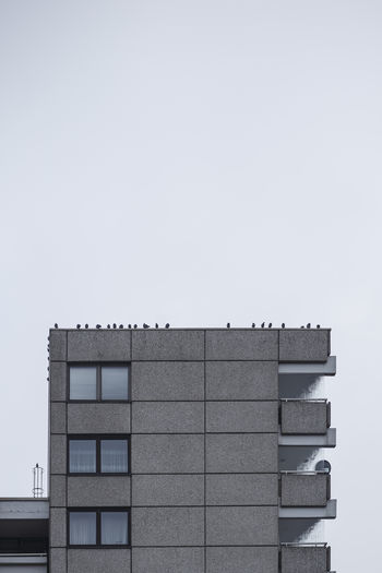 Row of pidgeons on a building with straight lines
