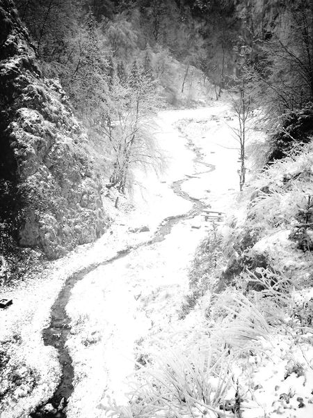 Winter Nature Relaxing Blackandwhite
