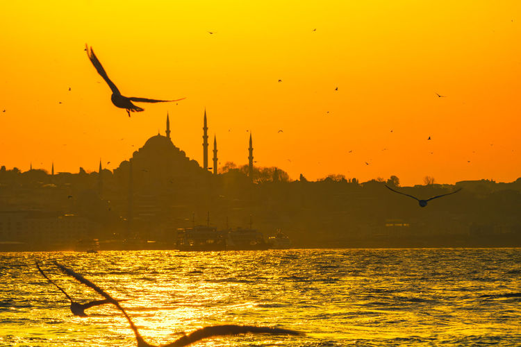 Bird flying over sea against orange sky