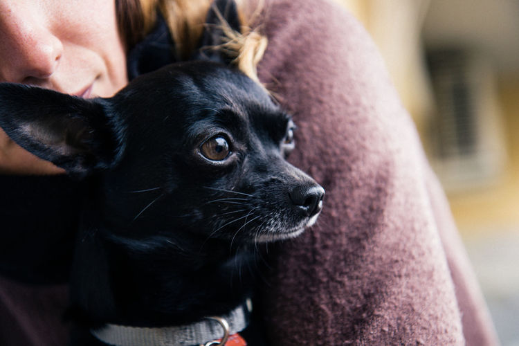 Close-up of black puppy