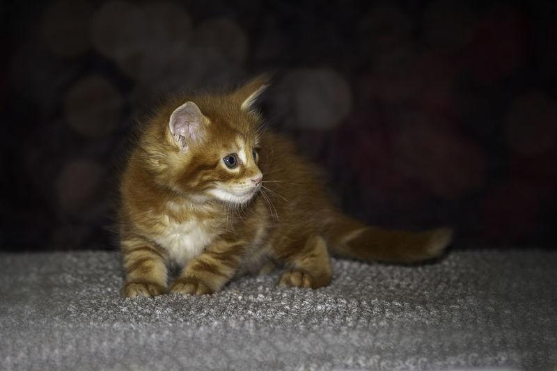 Portrait of kitten sitting