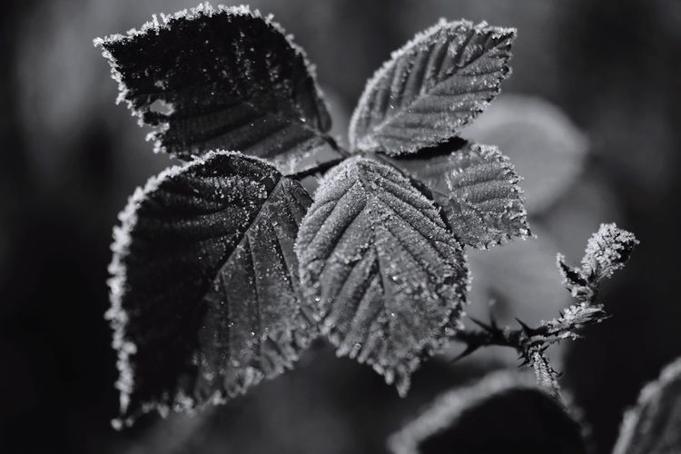frozen world Nature Photography Nature_collection Blackandwhite Beauty In Nature Reinheimer Teich My Point Of View Frozen Nature Frozen Cold Temperature Focus On Foreground Focus Cold Weather Cold Condition Winter Close-up Plant Plant Life Frost