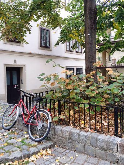 Autumn Bycicle Vienna Walking Around Autumn Collection Colors Of Autumn