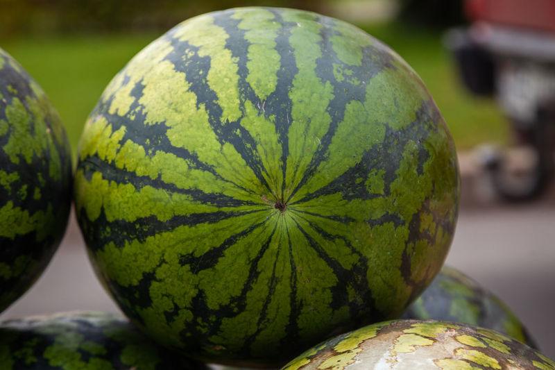 Watermelon in