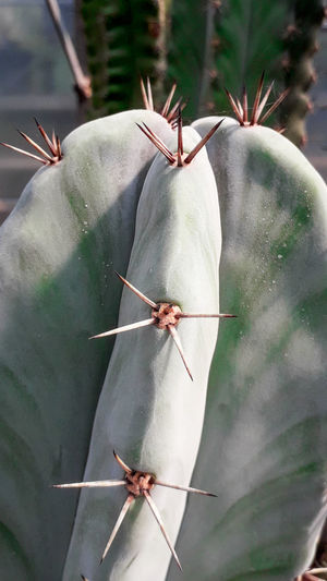 Cactus Trapped