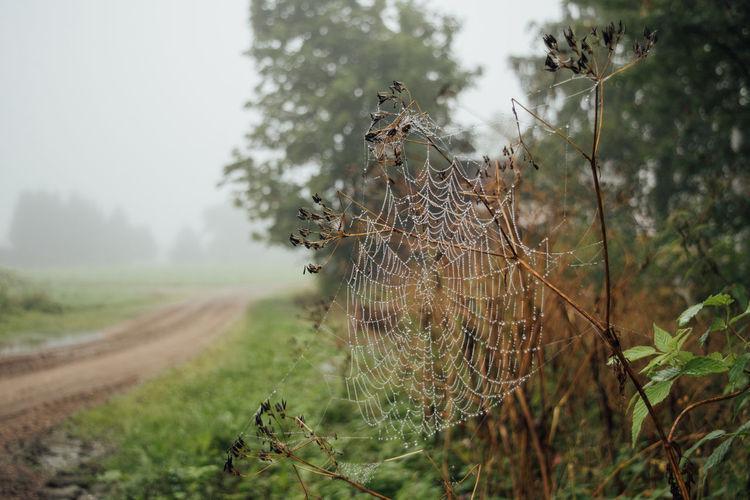 Wet spider web on plant