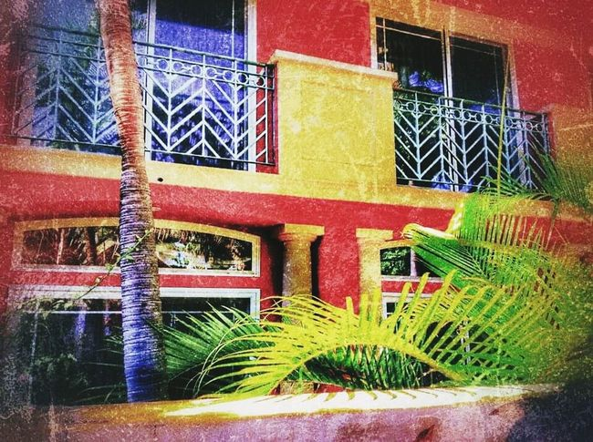 Built Structure Outdoors Day House Ivy Flower Multi Colored Cityscape Lifestyles City Building Exterior