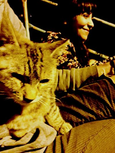 Cats Beautiful Sweety  Nightphotography Hello World Hanging Out Taking Photos Enjoying Life Gowaycat :Dd Relaxing
