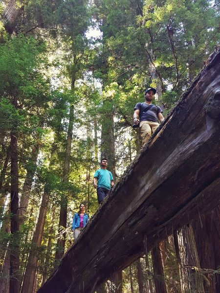 People And Places Tree Low Angle View Railing Branch Day Growth Outdoors Nature Sky Multi Colored Tranquil Scene Scenics Tranquility Green Color Redwoods