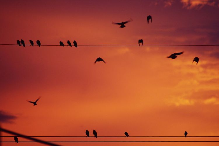 Low angle view of silhouette birds against orange sky