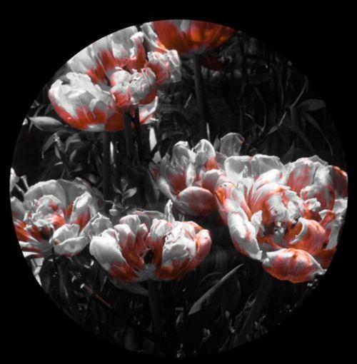 •Flower by Fioraio Bianchi•