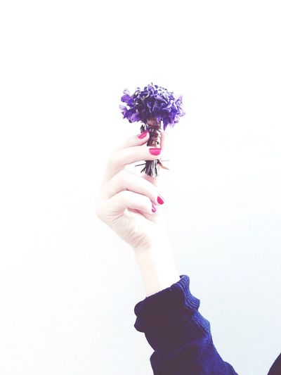 Hello World Flower Flowers Color Colors