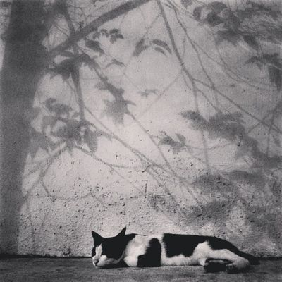 """Hola again. This time i am in the realm of B&W. A stark reality that my Juliet will never appear!"" Wondering what i am blabbing about? Kindly check my previous thoughts. ~@^_^@~"" Cat Catstagram Kitty Instacat Instameow Meow Allshots_ Artthursday Artphoto_bw Bws_artist_asia Bwstylesgf Bnw_life Bnwalma Bnw_worldwide Bws_worldwide Bnw_captures Bws_streets Bw_singapura Cafe_noir Dailythemes Gang_family Gf_daily Jj  Streetbw Singapore shadowplay shadow storyoftheday instagram webstagram"