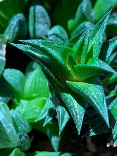 A vibrant green