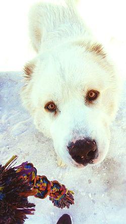 Dog Hund Freund Bestfriend Augen Eyes Wetnose Alabai