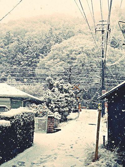 いつかの雪の日 Winter Snow Snow ❄ Japan
