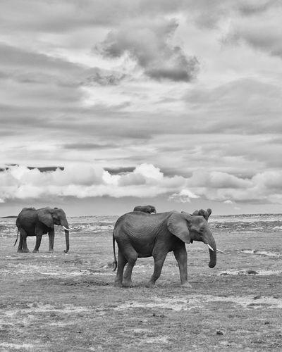 Horses on elephant against sky