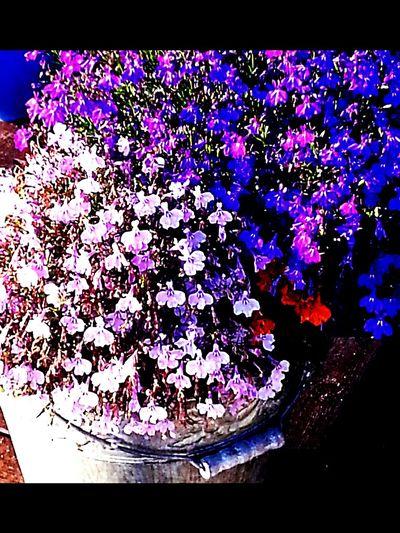 Favorit I Repris Flowers,Plants & Garden Sweden-landscape Summer EyeEmBestPics EyeEm Nature Lover Found On The Roll