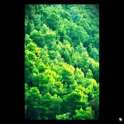 Forest Green Croacia Mountain summer
