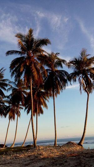 Palm trees on beach against the sky