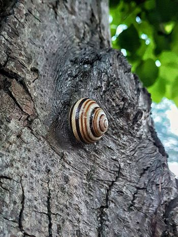 Tree Tree Trunk Textured  Gastropod Snail Close-up Animal Themes Wildlife