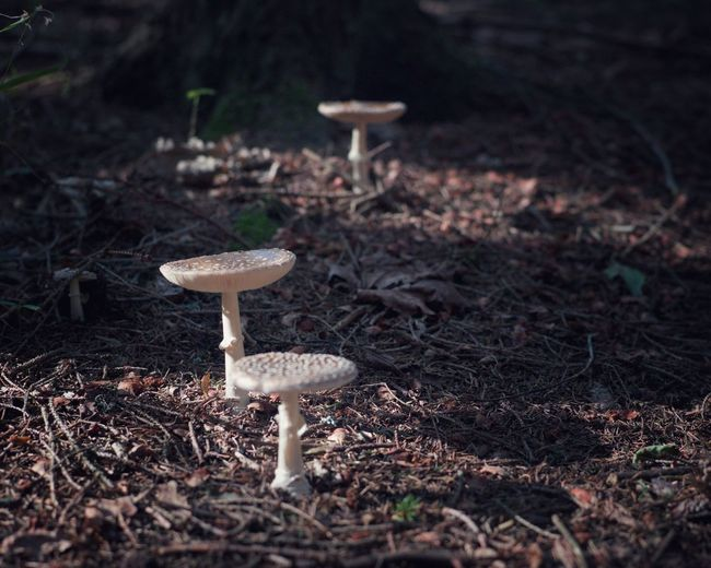 Toadstools Fungus Land Mushroom Food Vegetable Forest Nature No People Growth Tranquility Beauty In Nature Focus On Foreground