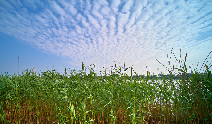 High angle view of stalks in field against sky