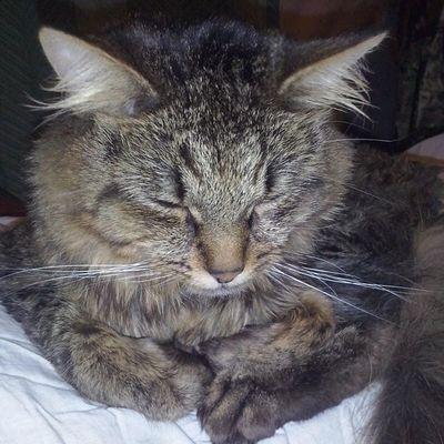 Instakotik Кузьма кузя кошки Кошастики котуха кот любимыйкот любителямкошек любимчик няша няшность милота милаш