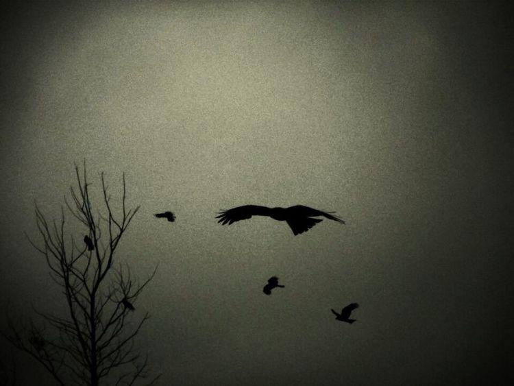 Eagles Blackandwhite