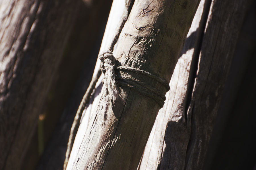 rope. Day Focus On Foreground Knotted Wood Nature No People Outdoors Rope Textured  Wood Wood - Material Brown Outdoor Photography Textured  Brown Background Brown Color Tribe Trunk Phylum Strain Timber Lumber Old Forgotten Forgotten Places  Beauty In Nature