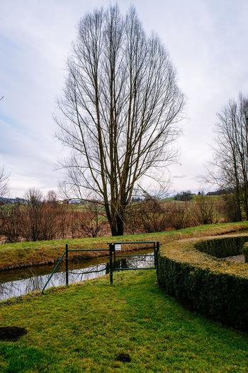 Bare Tree Field Grass Landscape Outdoors Park Tree Tree Trunk