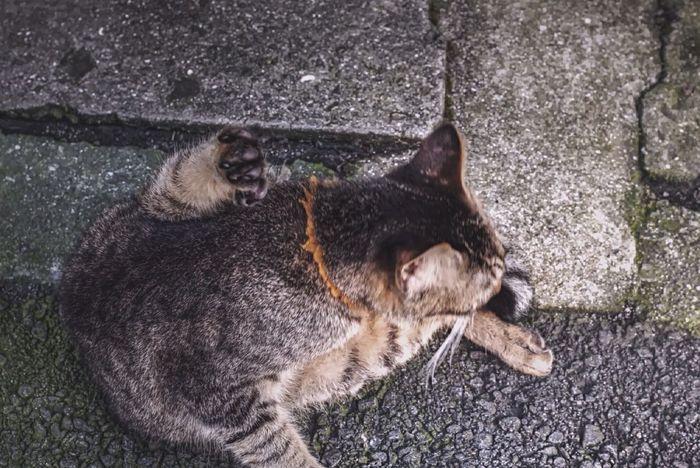 Finding Fukuoka Cat : Streetphoto_color Walking Around Nakasu, Fukuoka Aerial Shot 😝 Animal Photography Pets Corner On The Street 50mm F/5.6 うしろアタマ
