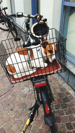Doggy Style..😂 Dog Traveller Dog In Basket Funny Dog Dog Day Outdoors
