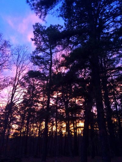 Colors Pinelands Pine Tree Pines Tree Forest Nature Tree Trunk Beauty In Nature Scenics Tranquil Scene Tranquility Silhouette Growth Sky WoodLand Outdoors Wilderness Area Tree Area Sunset Branch EyeEmNewHere