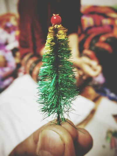 Close-up of hand holding christmas tree