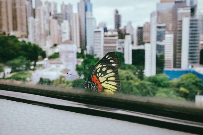 Little encounter in a concrete jungle The Week On EyeEm Skyline No People Architecturelovers Hong Kong Architecture Hong Kong HongKong Skyscraper Butterfly Swallowtail Butterfly Urban Skyline Urban Landscape Lifestyles Insect Encounter Window Central Hong Kong Office View From The Window... Resting Selective Focus Concrete Jungle Contact Lifeisbeautiful Butterfly - Insect